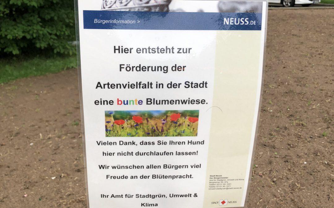 Der Hermannsplatz blüht wieder